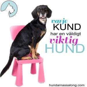 Hundarnas Salong: Hund sitter på stol med texten Varje kund har en väldigt viktig hund