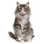 Hundarnas Salong: fluffig katt